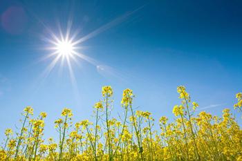 Aurinkovoiman yhteishankinta käynnissä