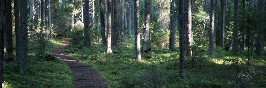 Mennään metsään -kampanja käynnistyy
