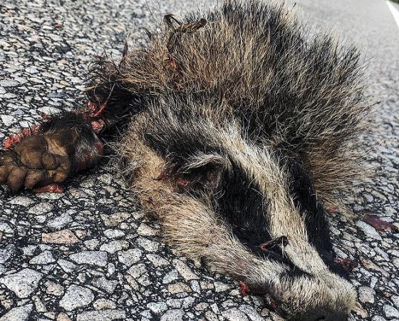 #roadkillsuomi Eläinten liikennekuolemat