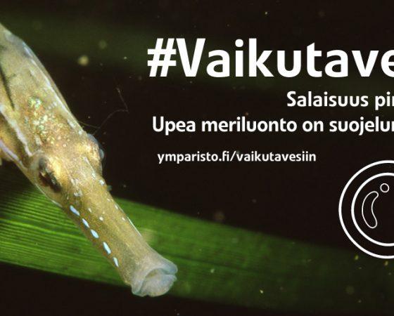 Yleisötilaisuudet merensuojelusta, Turku ja Pori