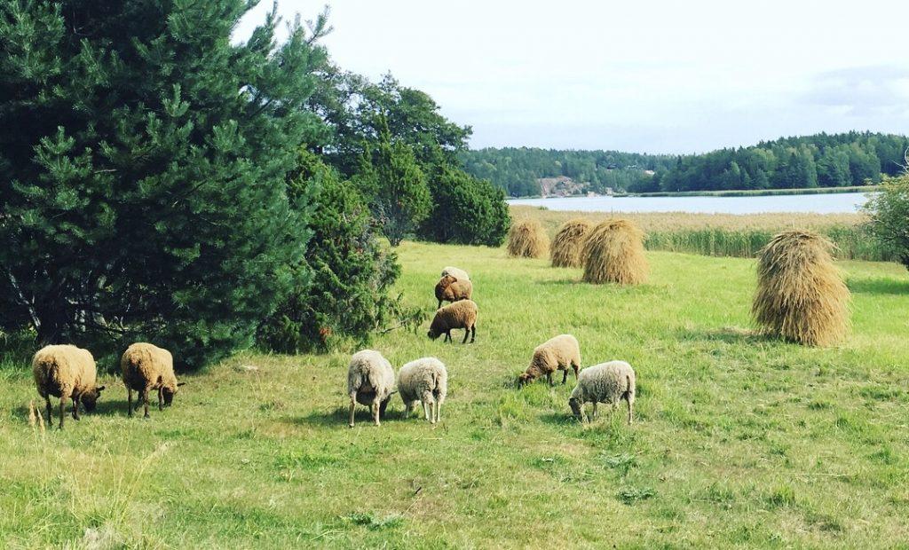 Lampaita Norrbyholmen