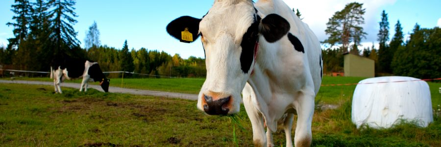 Maatalous ja ilmastonmuutos -webinaarit