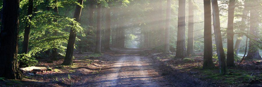 Hiilineutraalisuomi.fi:ssä julkaisuja Canemure-hankkeen tuloksista ja hyvistä käytännöistä