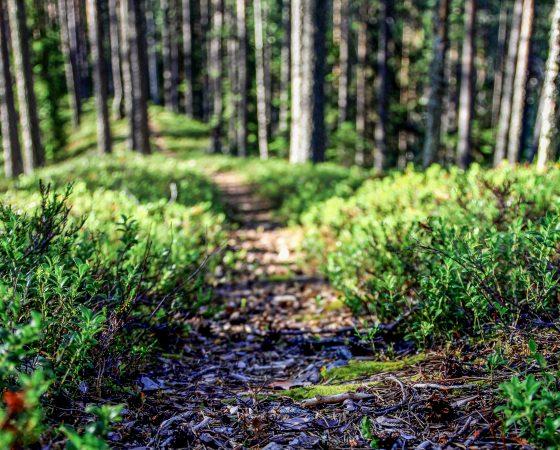 Metsän kaavoituksen hiilipäästöjen arviointityökalu esittelyssä 28.5.
