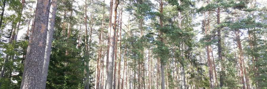 Ilmastokestävä metsätalous, puurakentaminen ja hyvinvointivaikutukset -tilaisuuksia siirretty syksyyn