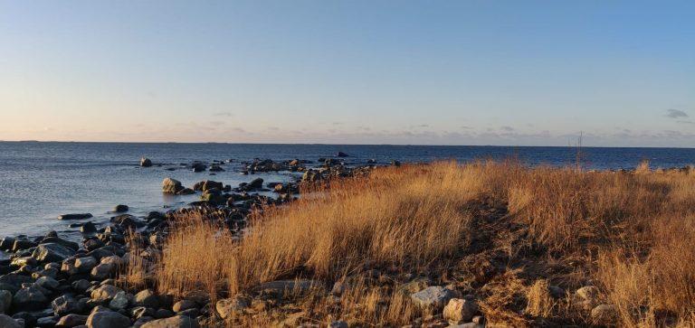 Kivikkoinen merenranta ja heinikkoa.