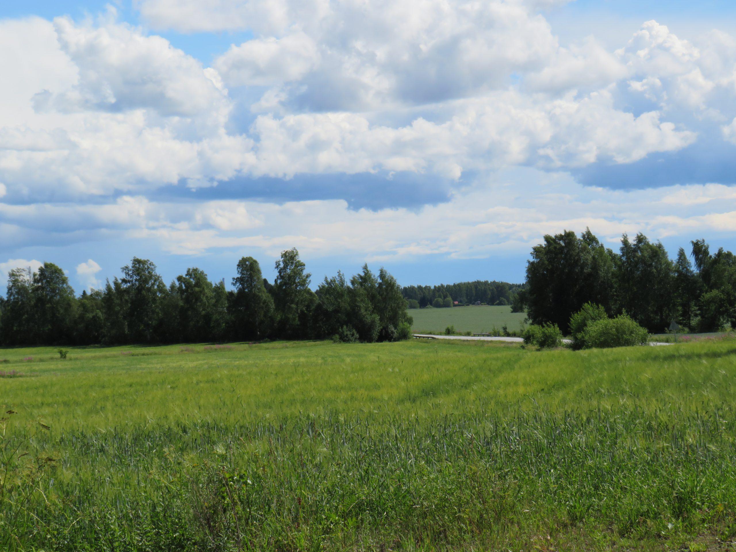 Vihreää peltomaisemaa, jossa oikealla takana näkyy tie ja keskellä kuvaa puita rivissä. Taivas pilvinen.