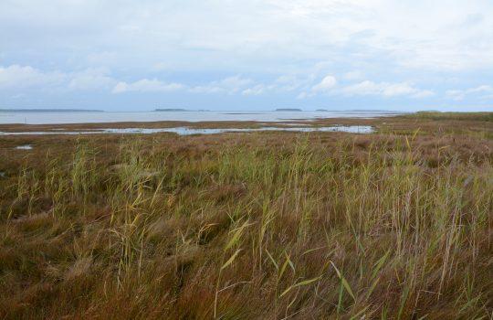 Taka-alalla merta ja saaria, edessä ruskeahkoa ruohoa ja lietettä.