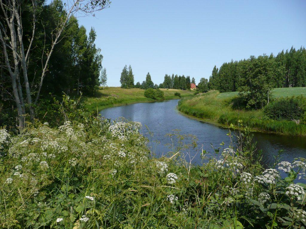 Kuvassa keskellä kulkee sininen joki kohti horisonttia. Edessä valkoisia kukkia vihreine lehtineen. Joen kummallakin puolella puita ja nurmikkoa.