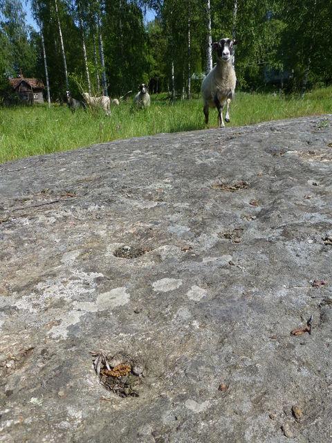 Kuvan etuosassa kiveä tai kalliota, jossa pyöreitä aukkoja. Taustalla lampaat lähestyvät kalliota.