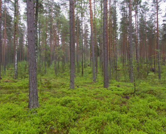 Satakunnan metsäfoorumi 1.10.2020