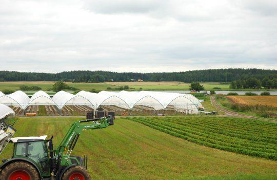 Kuvan etualalla vasemmassa reunassa vihreä traktori. Taustalla vihertävää peltomaisemaa ja pellolla pitkiä valkoisia telttamaisia rakennelmia.
