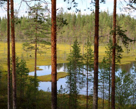 Luonnon monimuotoisuutta edistävä Helmi-ohjelma lausunnoille
