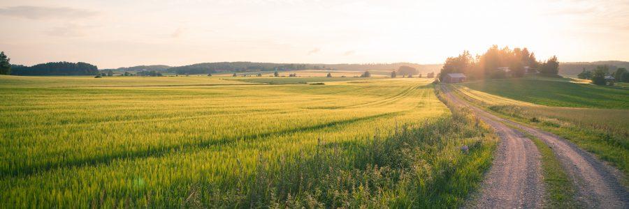 Haloo maaseudun kesälehti on ilmestynyt!