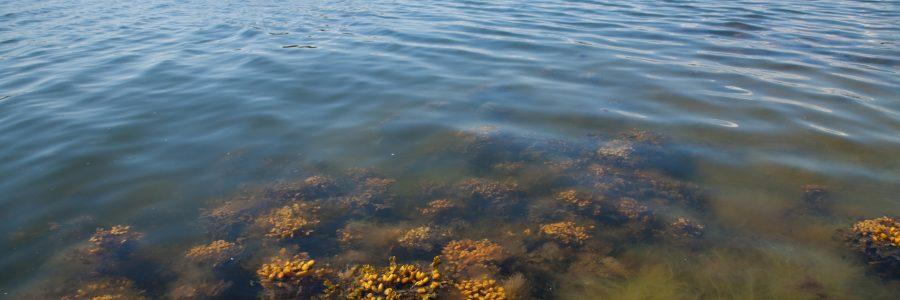 Jaakko Mannio: Vaaralliset aineet vesiluonnossa – kehittynyt seuranta on tärkeä toimenpide