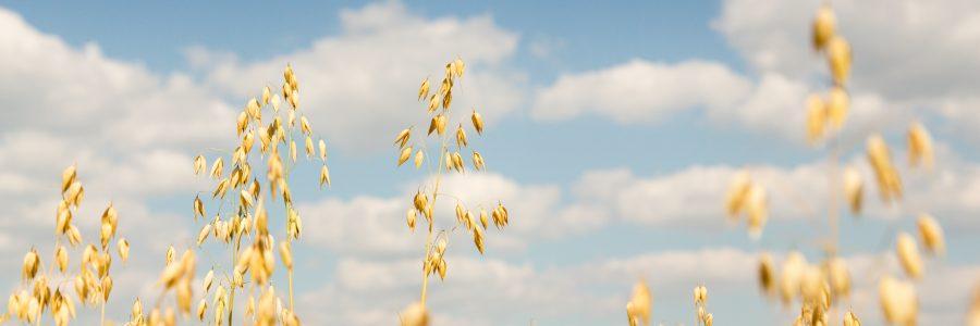Ilmastonmuutos ja maanviljely -osa 2, paluu tulevaisuuteen