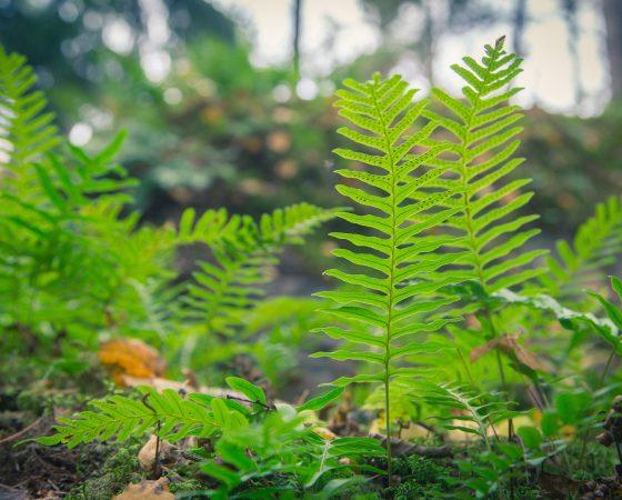 Luontolahja-kampanja innostaa suojelemaan suomalaista luontoa