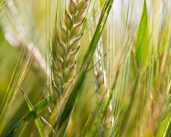 Uudistavan viljelyn päivä 14.7.2021