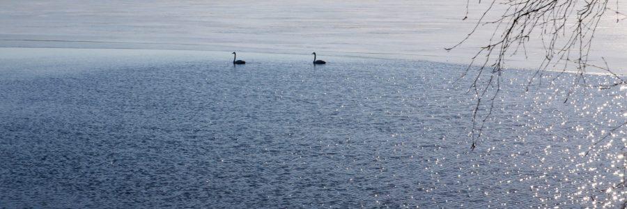 Saaristomerellä huomattava sinileväriski