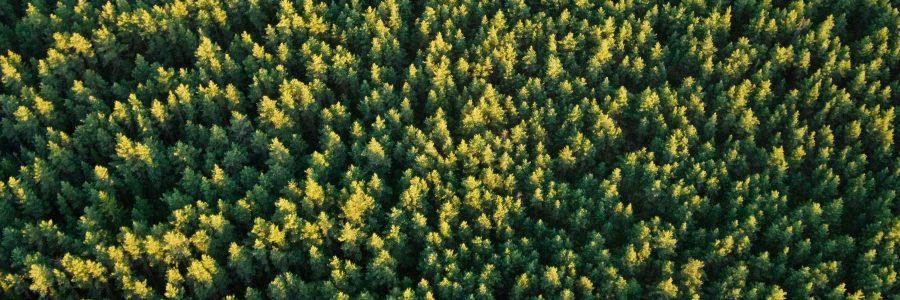 Kansallinen metsästrategia 2025 -webinaari: Sosiaalinen ja kulttuurinen kestävyys metsästrategiassa – osallisuus ja osaaminen 1.9.2021