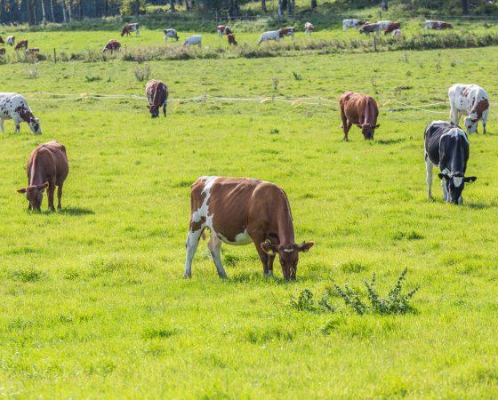 Kotieläintalouden ympäristönsuojeluohje on nyt päivitetty