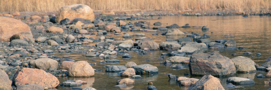 Järviruoko muuntuu riesasta hyödykkeeksi