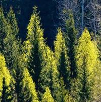 Metsien merkitys korostuu ilmastonmuutoksessa – moniarvoisuus tunnustetaan