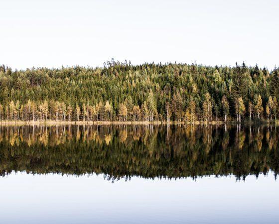 Metsätalouden vesiensuojelupäivät 2.-4.11.2021
