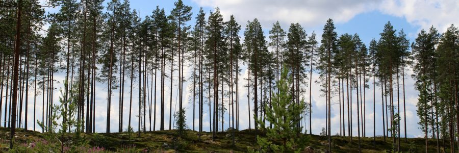 Säästöpuut ovat tärkeitä metsäluonnon monimuotoisuudelle