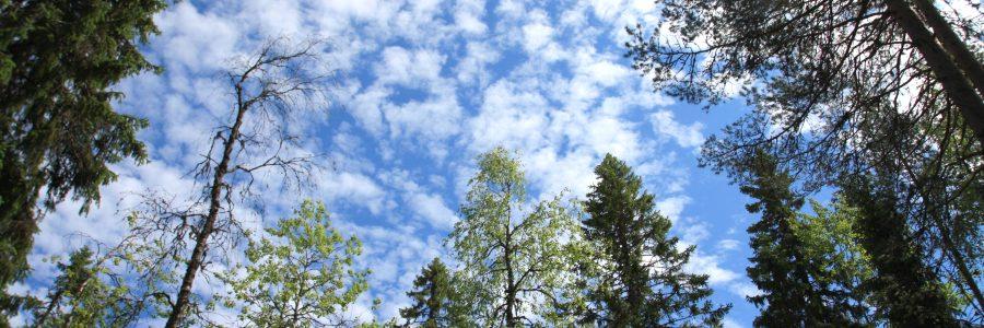 Webinaari: Hiilidioksidin talteenotto ja hyödyntäminen nyt ja tulevaisuudessa 27.10.2021